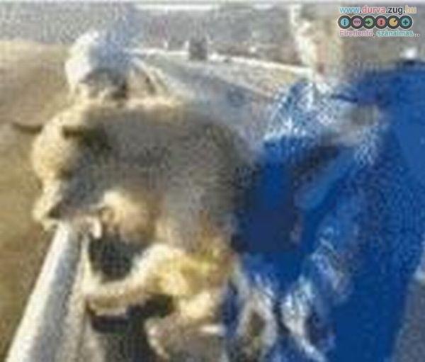 Durva - élő kutyát dob le a hídról - durva videó!