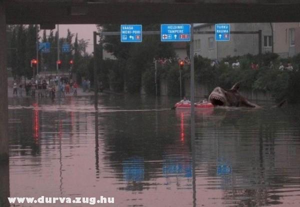 Cápa a városban
