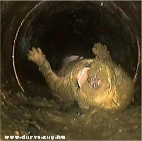 Lehúzták a wc-be, de túlélte a merülést!