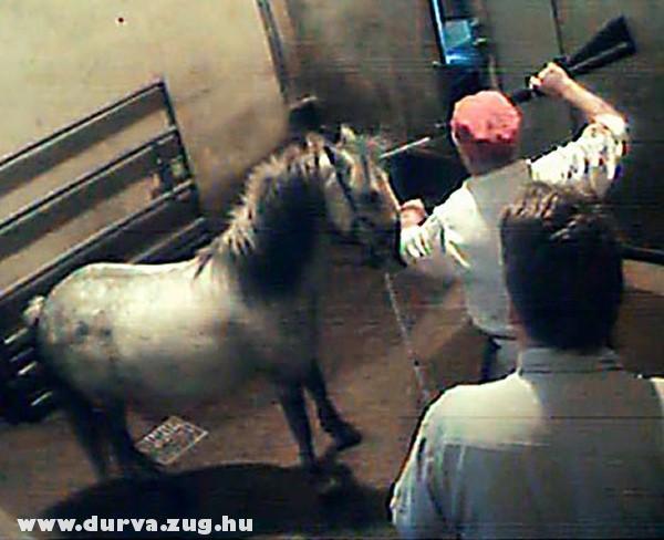Fejbe lövik a lovat - lóvágóhíd?!