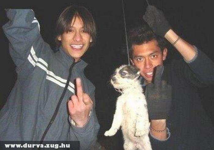Tini Állatkínzók - A világ egy veszélyes hely, nem azok miatt akik gonoszságokat követnek el, hanem azok miatt akik azt tétlenül nézik!