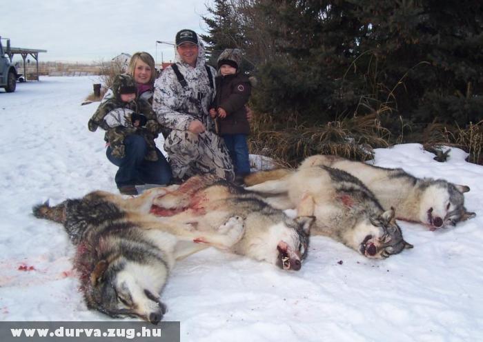 Farkasvadászaton - családi program?!