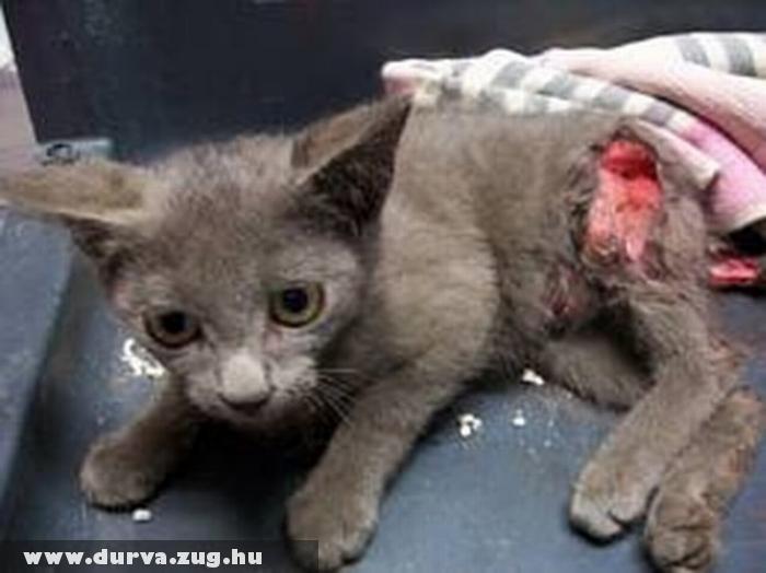 Kerítésbe akadt cica