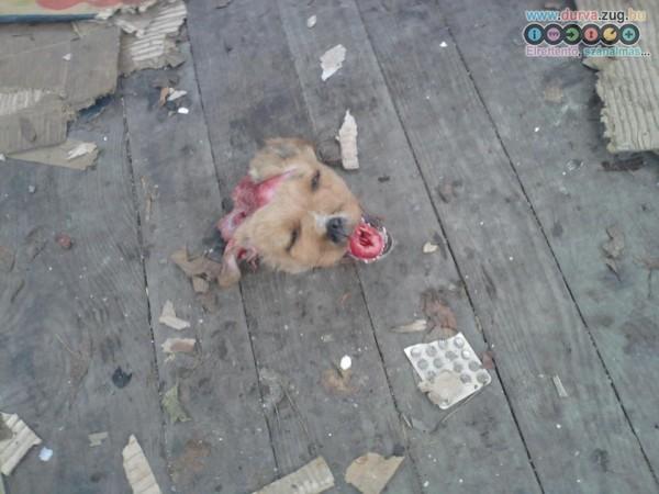 Kutyát is mészároltak... annó a boszniai háborúban