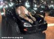 Ló az autóban
