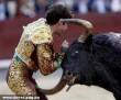 Felnyársalta a bika