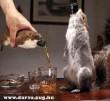 Egy pohárral a mókusból?